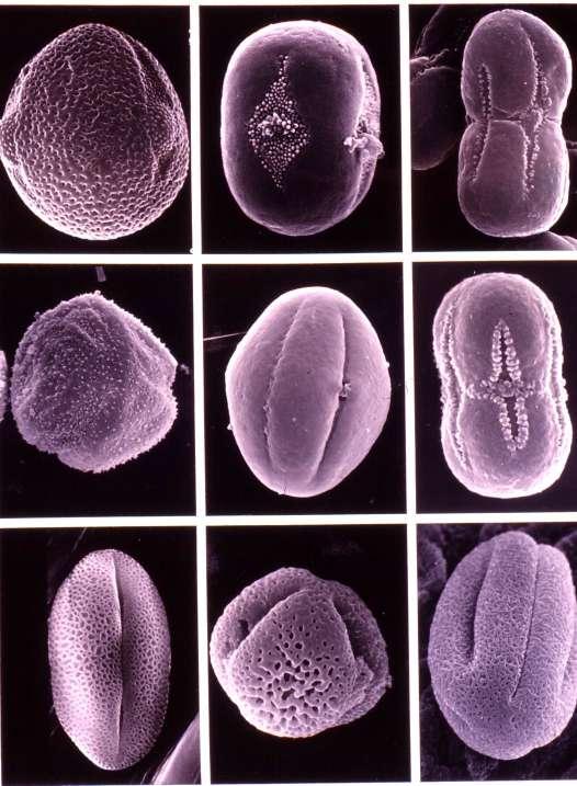 以下植物的结构图